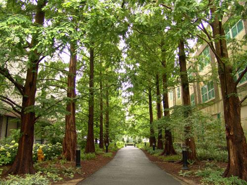 scott-arboretum-woody-plants